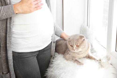 dievča mačička a zadok sexy traky porno